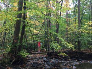 Laurel Ridge PA State Park