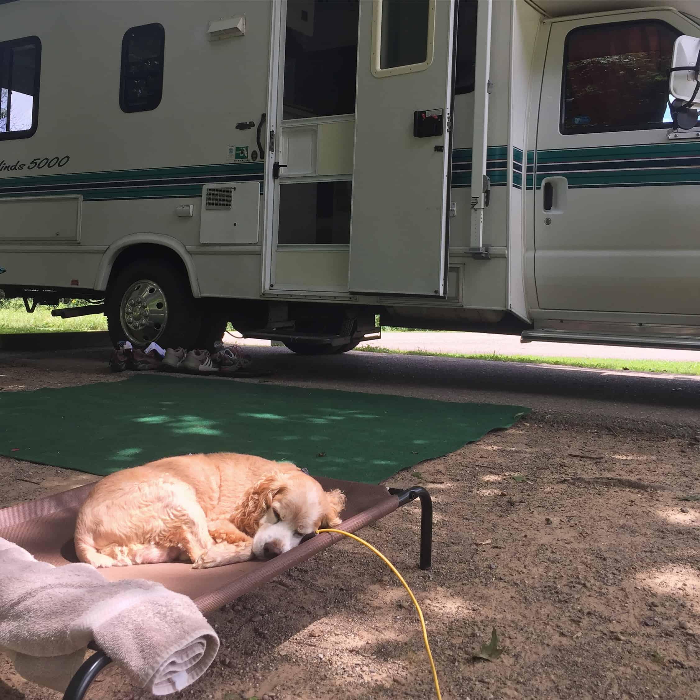 senior dog travel
