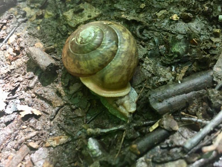 parker dam state park pa snail