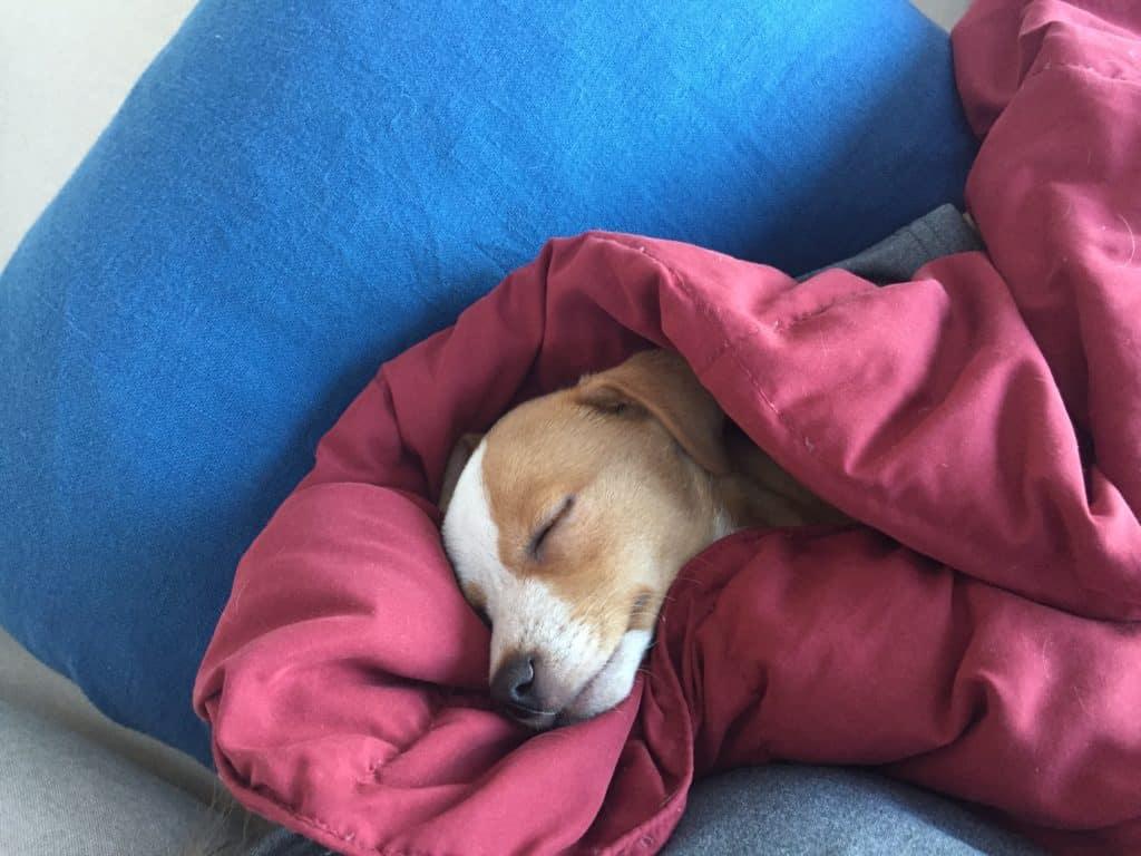 hazel sleeping 2