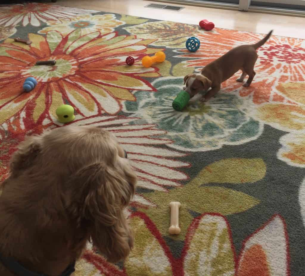 Hazel and her toys