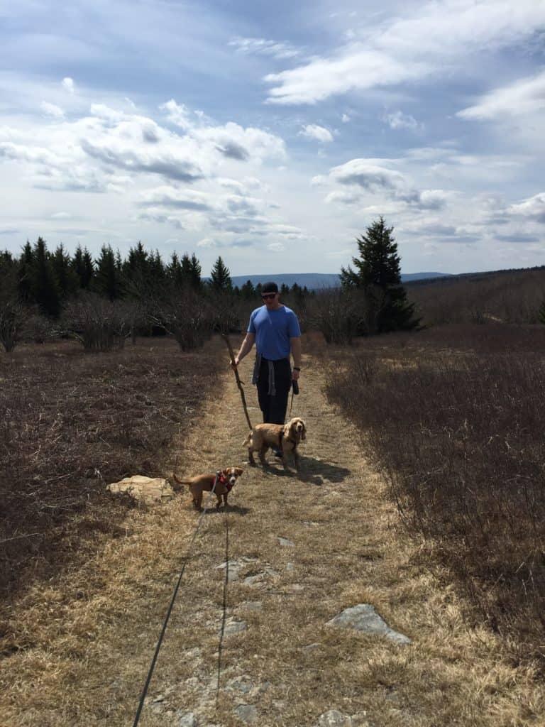 dolly sods dog hike 2
