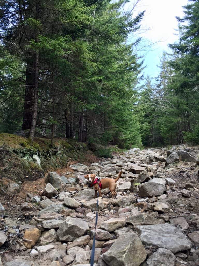Hazel hikes Dolly Sods 1