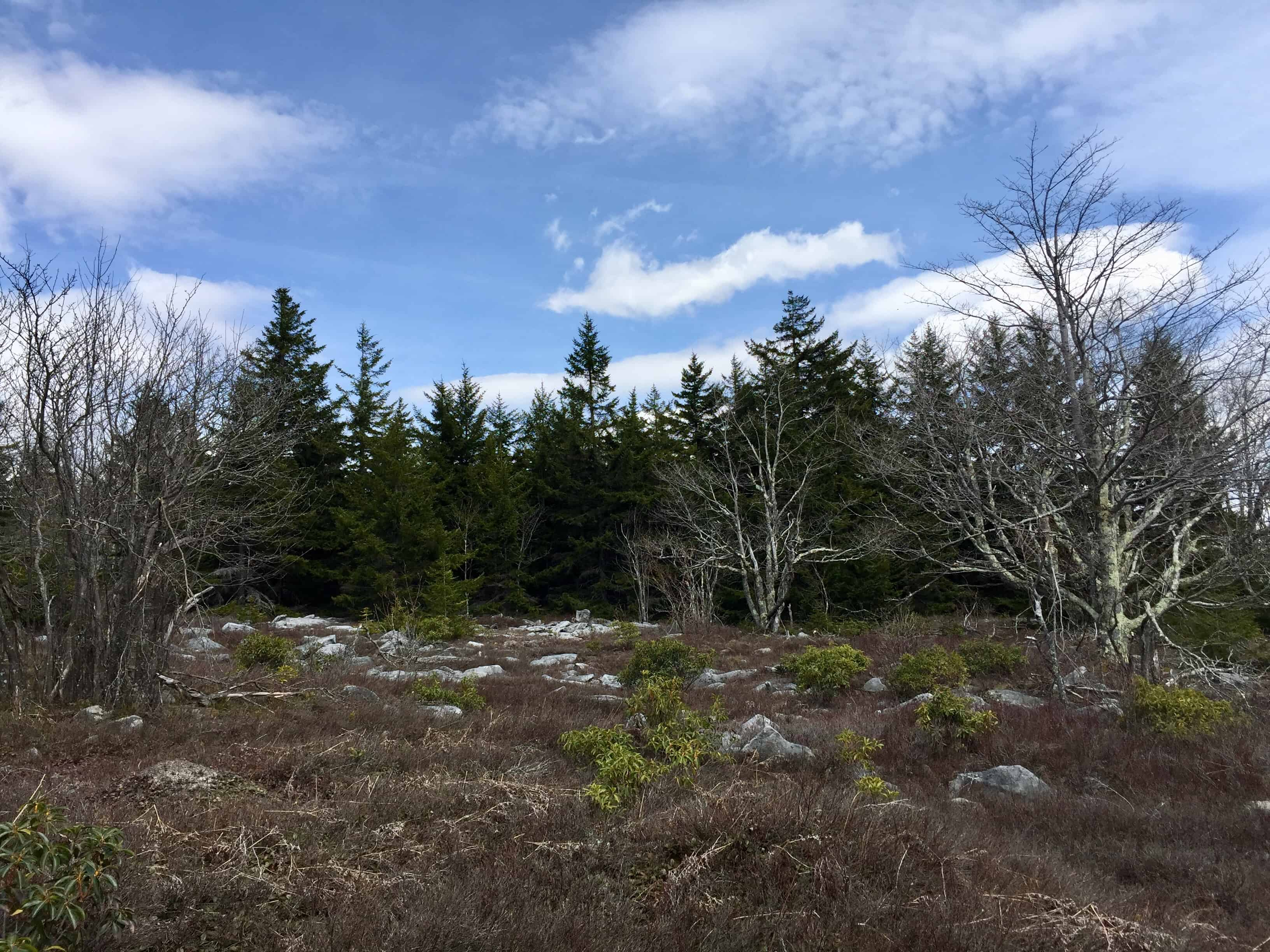 canaan valley, dolly sods, west virginia