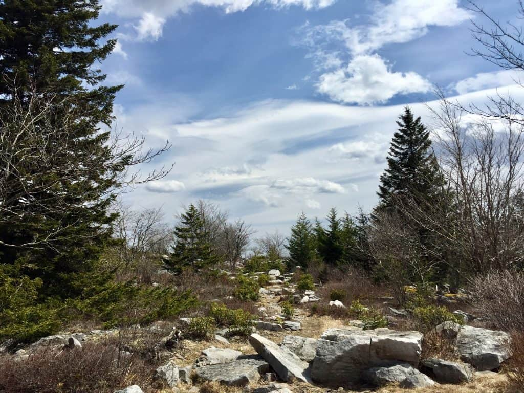 dolly sods wilderness landscape