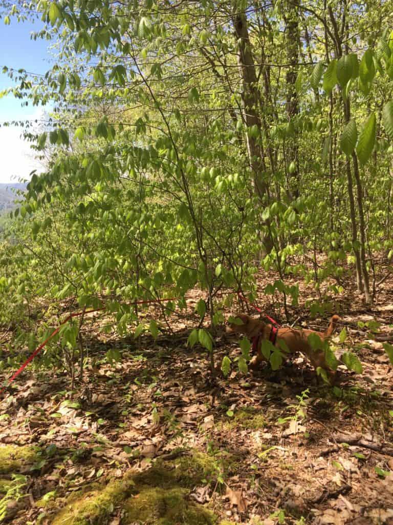 sizerville nature trail hazel