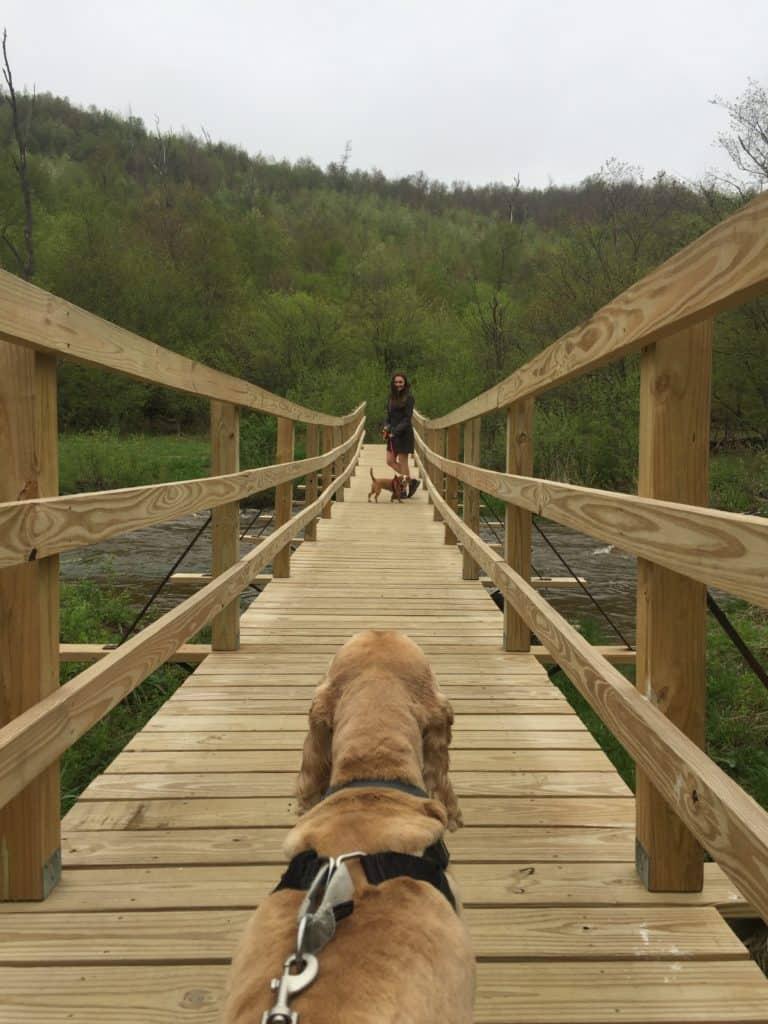 kinzua creek trail - bottom