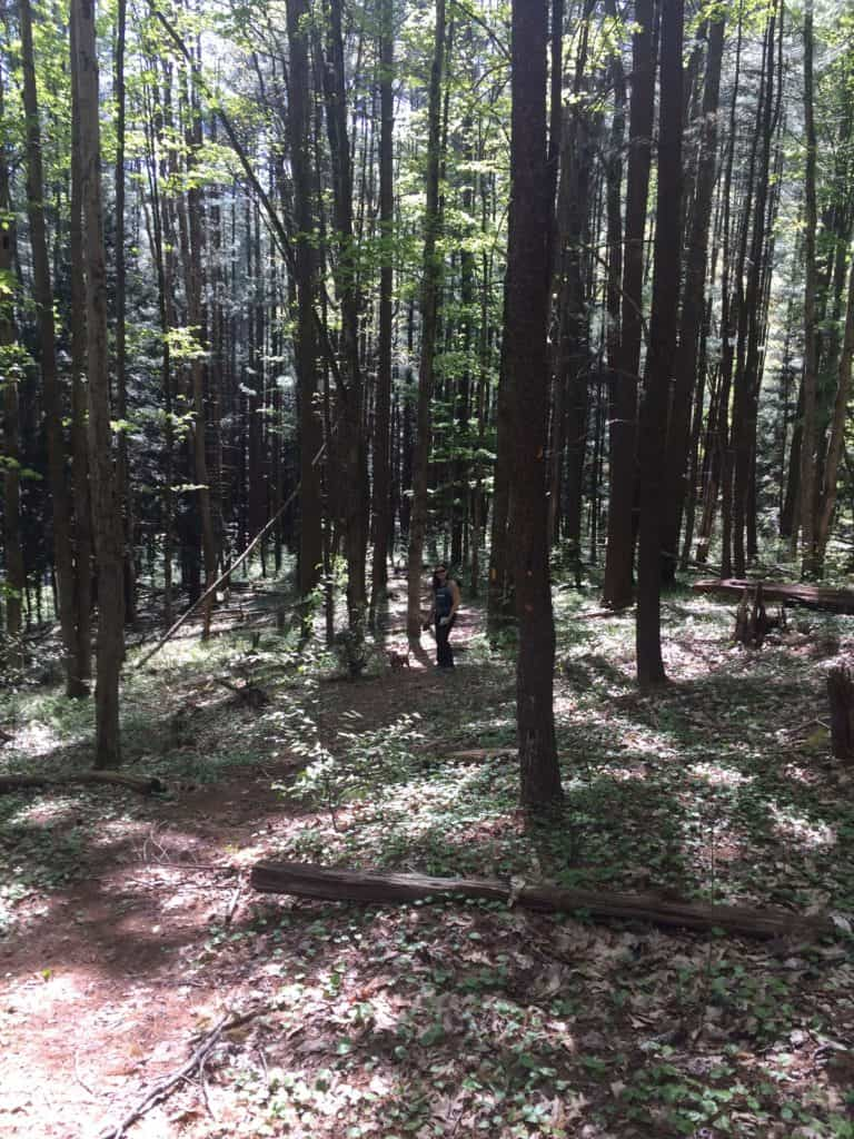 nady hollow trail sizerville state park