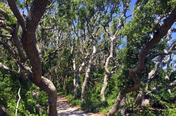 fort macon state park trail north carolina