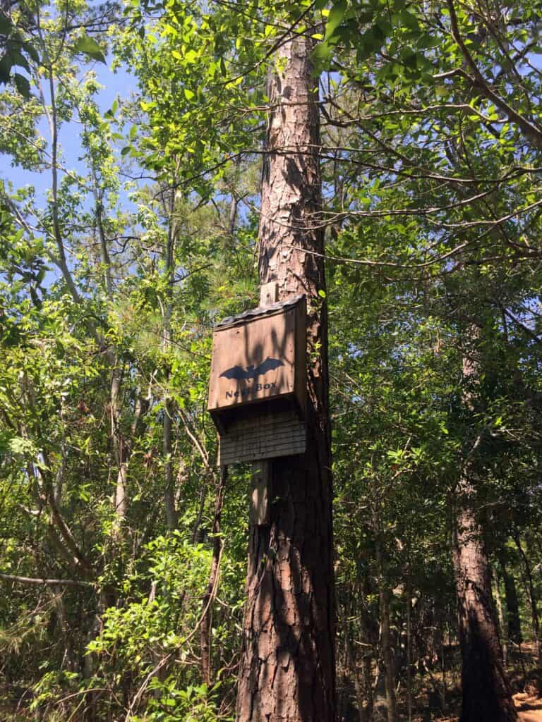 north carolina nature trail bat box