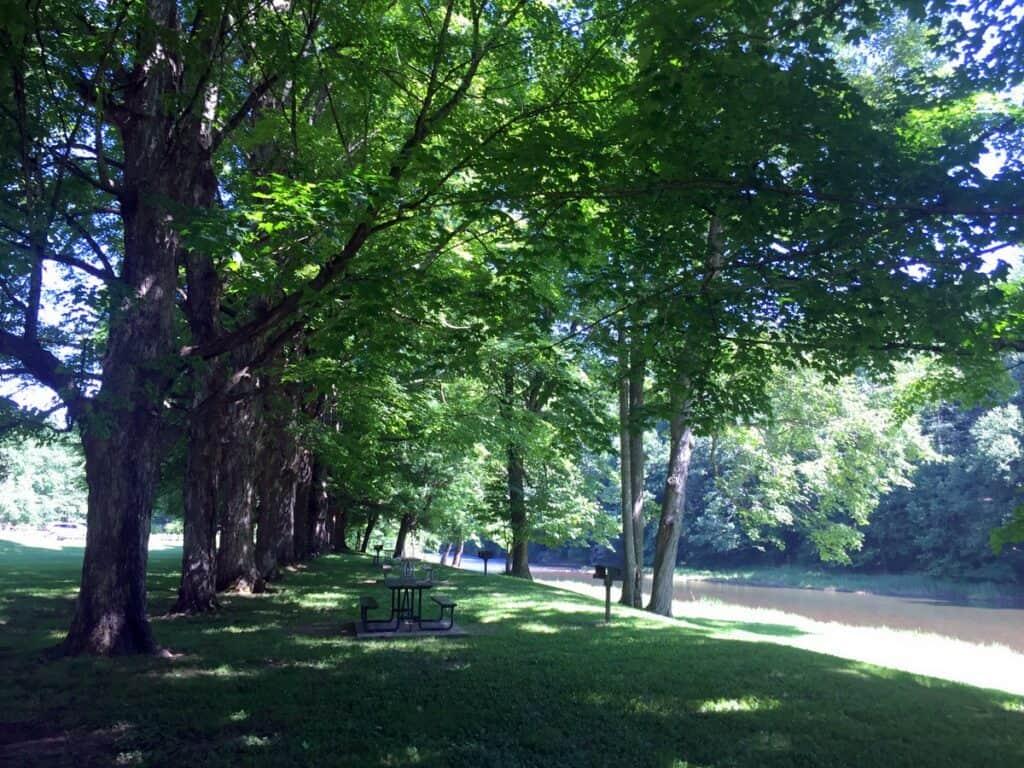 40 maples at sinnemahoning park