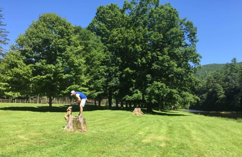 sinnemahoning state park 40 maples tree missing