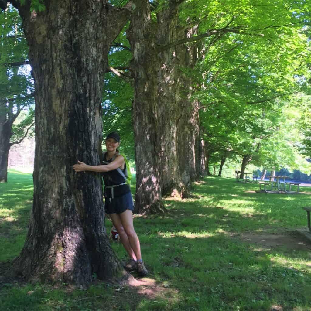 40 maples hug at sinnemahoning state park