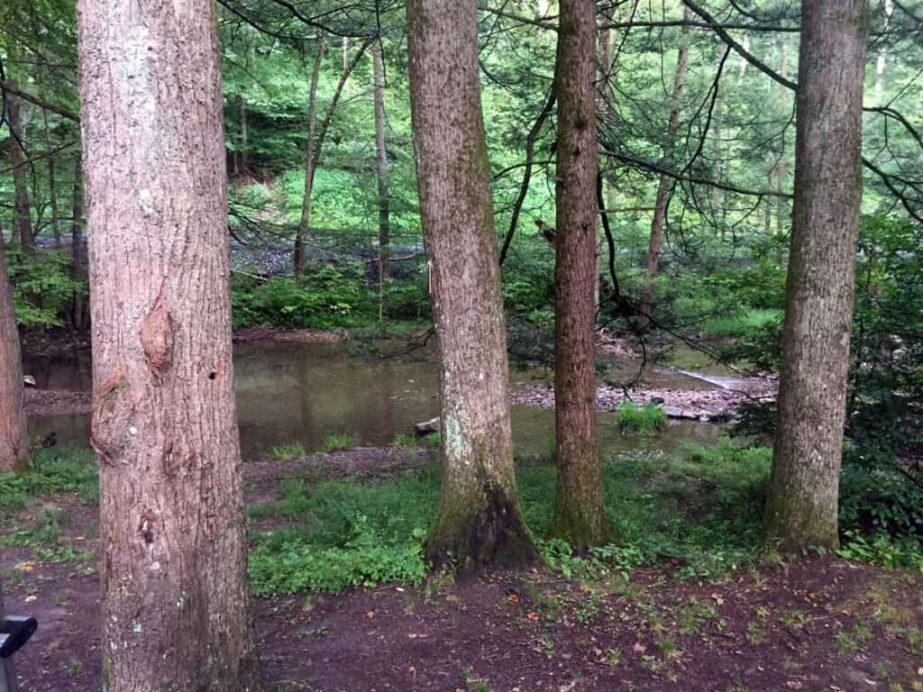 Hyner Run Campground Back Window View