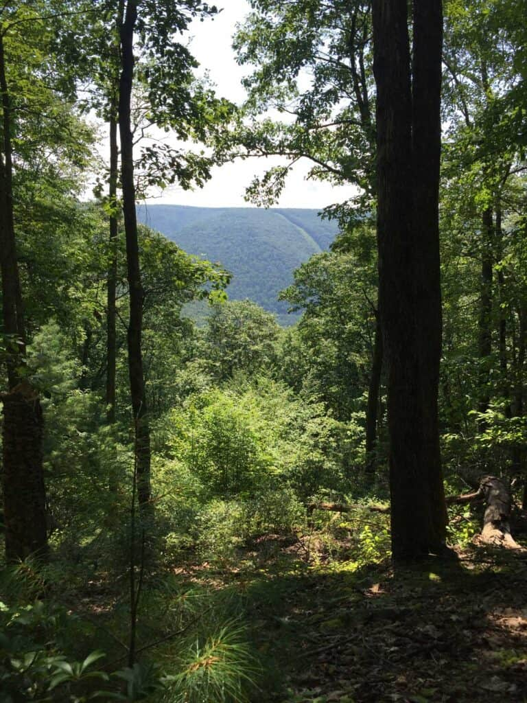 long fork loop trail overlook at hyner run state park
