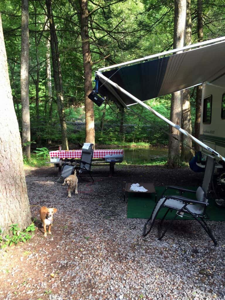 cozy campground at hyner run state park