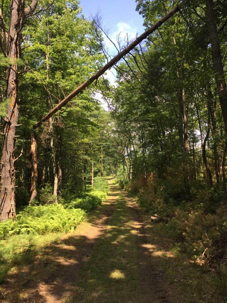 long fork loop trail