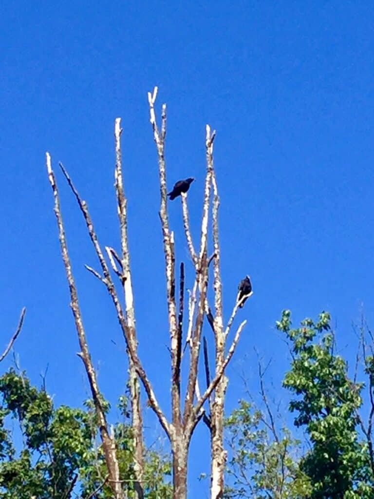west branch state park turkey vultures