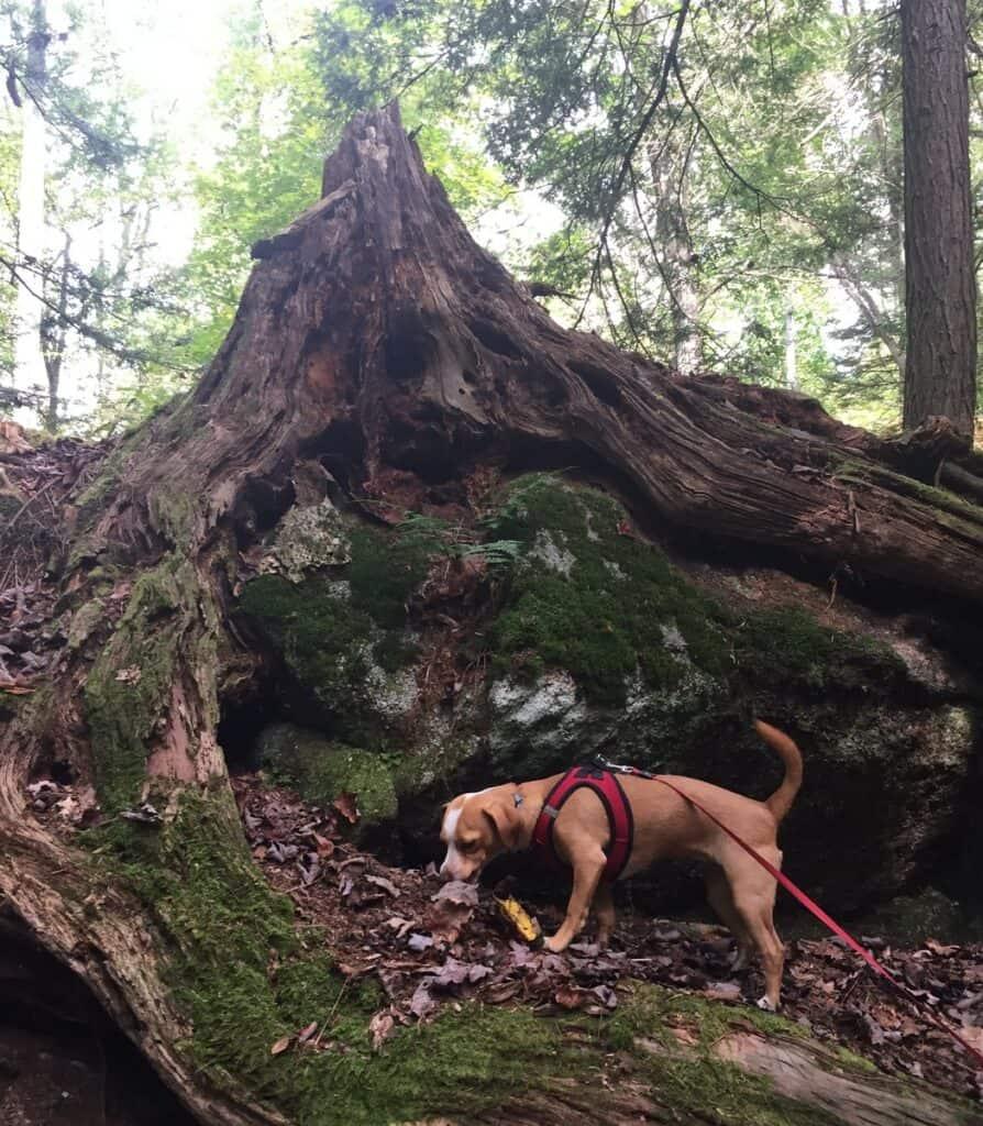 hazel on natures rock garden trail