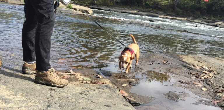 dog friendly ohiopyle state park trails