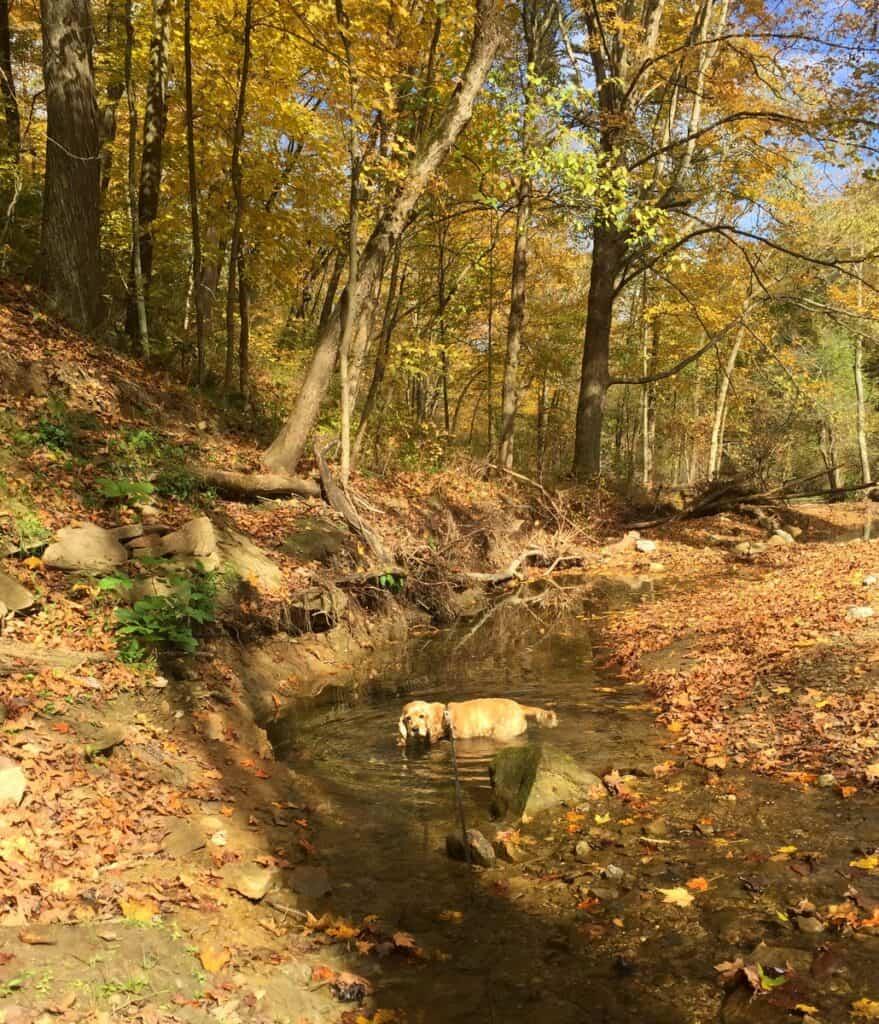 franklin in raccoon creek