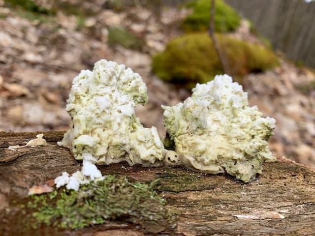Kooser State Park Kincora Trail mushrooms
