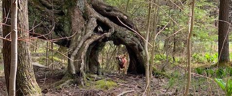 Kooser State Park Tree Army Trail with Hazel