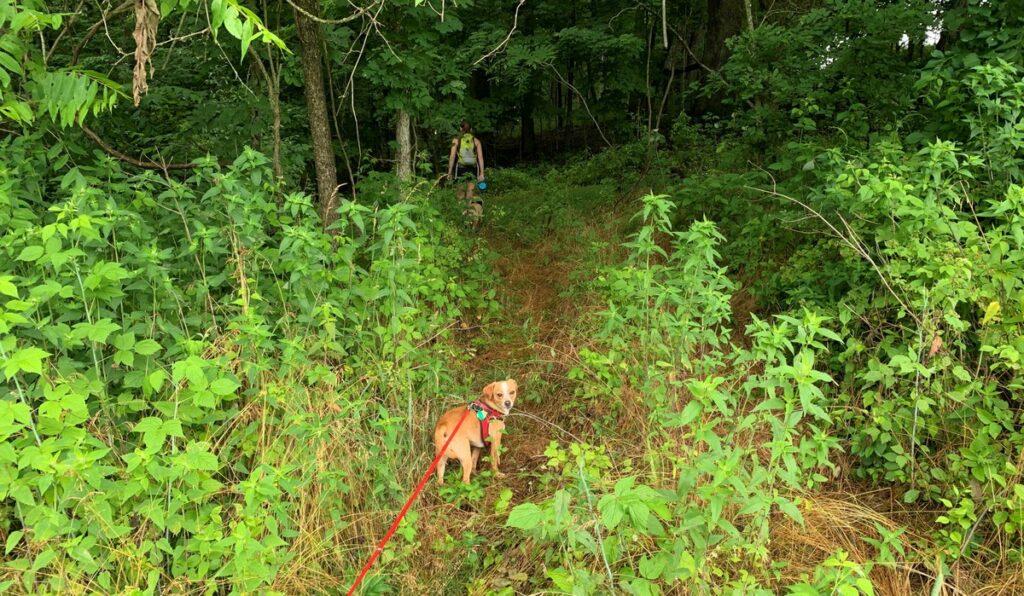 little buffalo state park dog hike 1