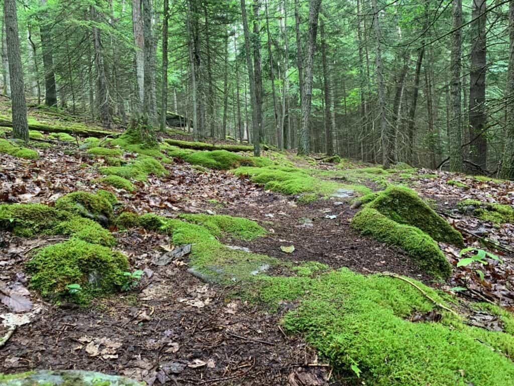 clear creek trail moss
