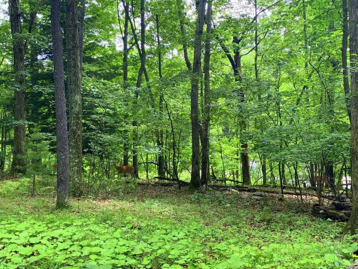 deep creek lake state park bg