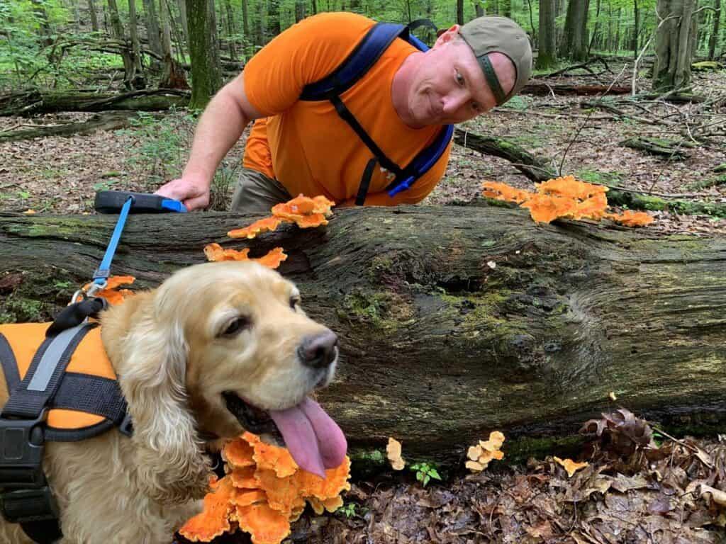 mushrooms at deep creek lake state park