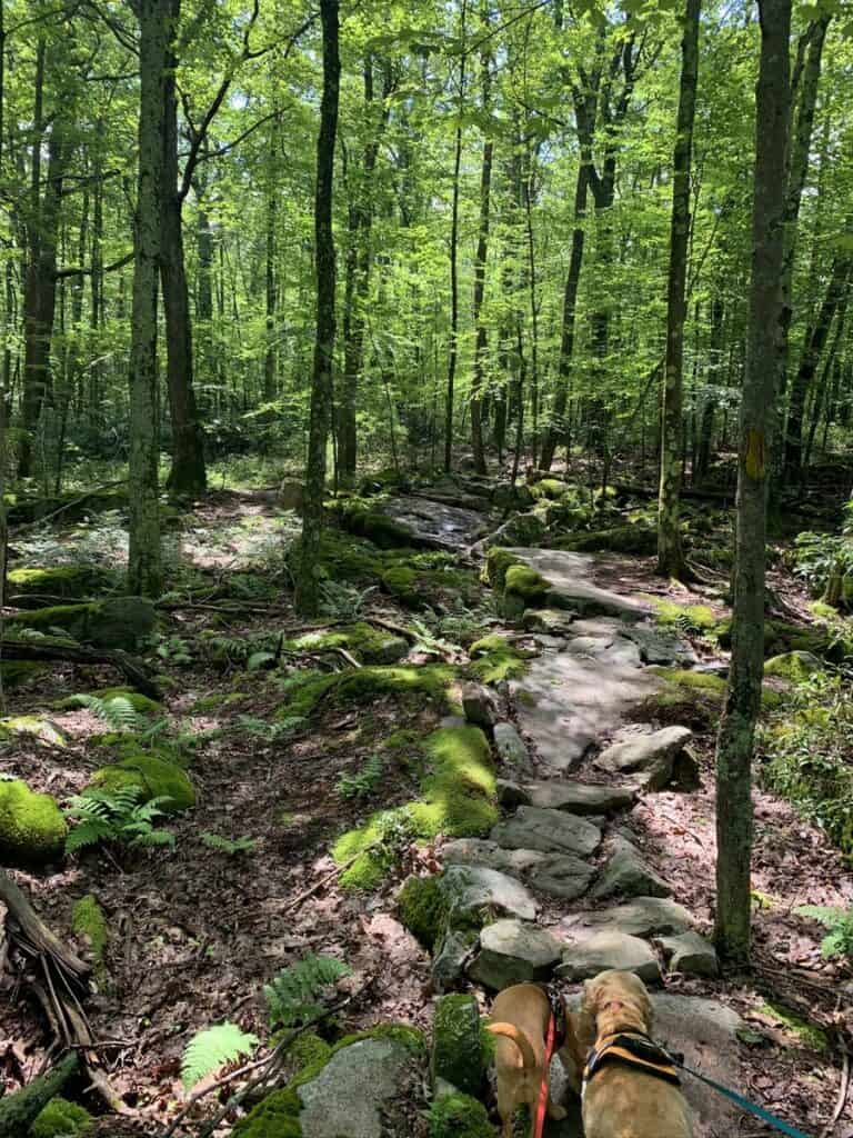 rocky trails at deep creek lake state park
