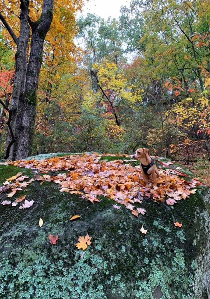 cedar creek state park hazel queen