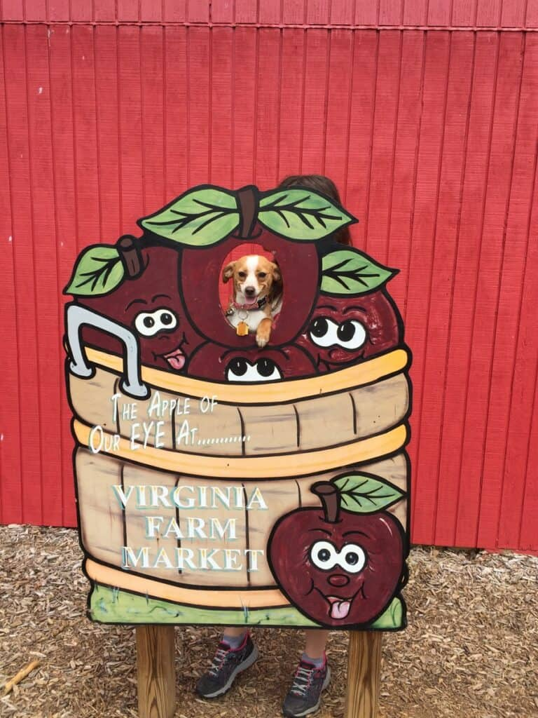 Hazel at Virginia Farm Market