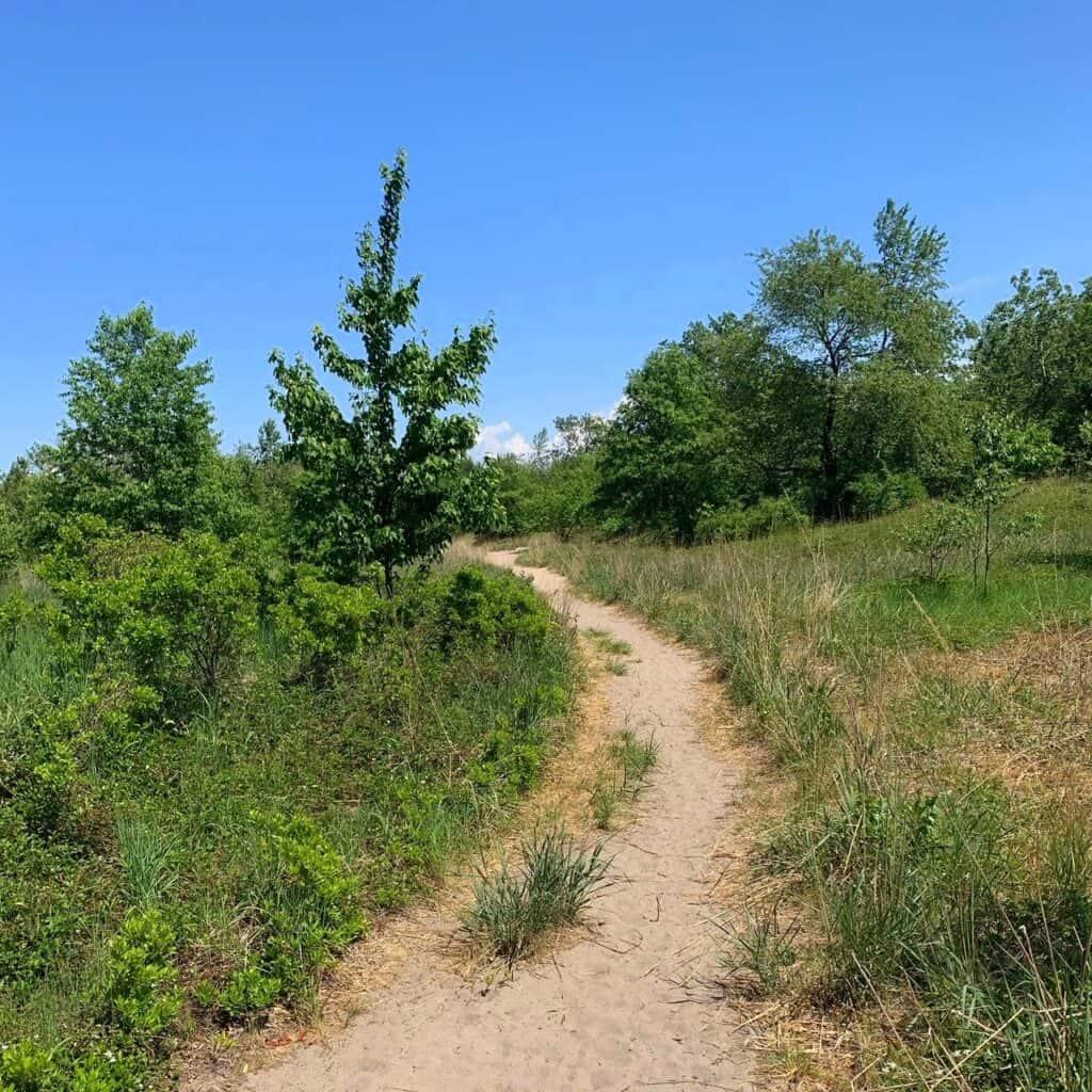 dead pond trail 2