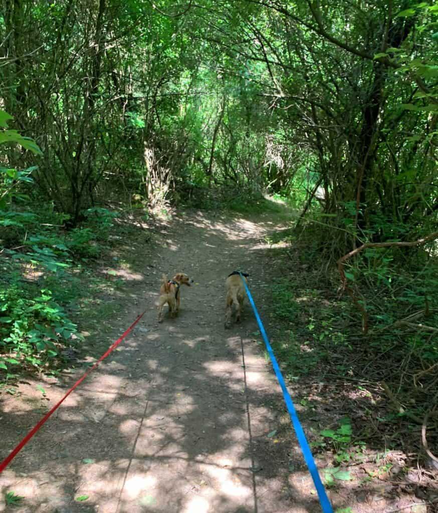 franklin and hazel on laho trail