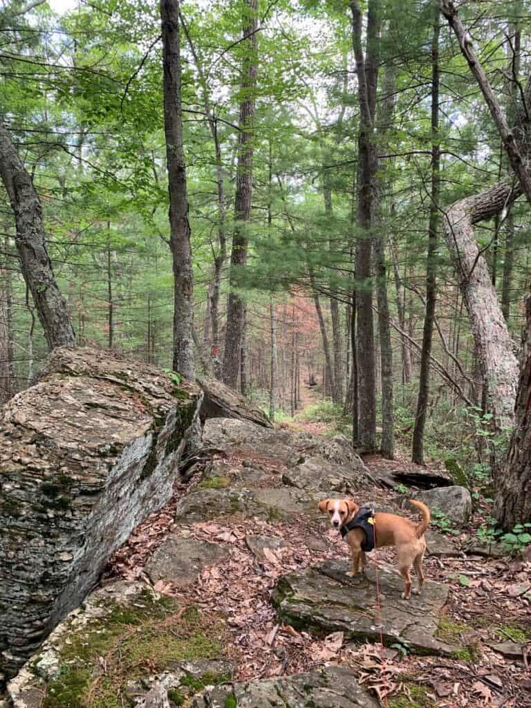 hazel on mid state trail rocks at little pine state park